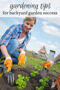 Gardening Tips for Backyard Garden Success